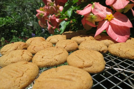 Gingery cookies